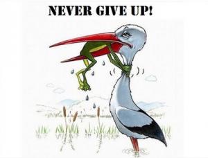 nooit opgeven